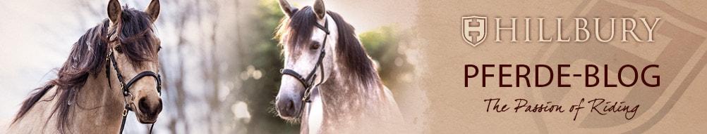 Hillbury Pferde Blog header image