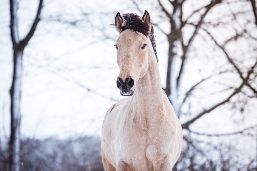 Erwartungen an Pferd